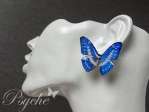 キプリスモルフォ 蝶の標本ピアス(片耳)