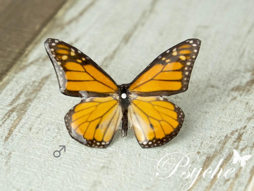 オオカバマダラ♂ 蝶の標本ピアス(片耳)
