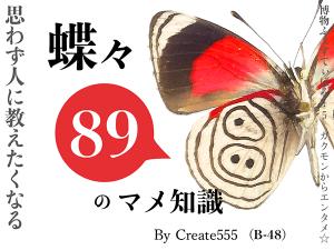 蝶々89のマメ知識 イメージ画像
