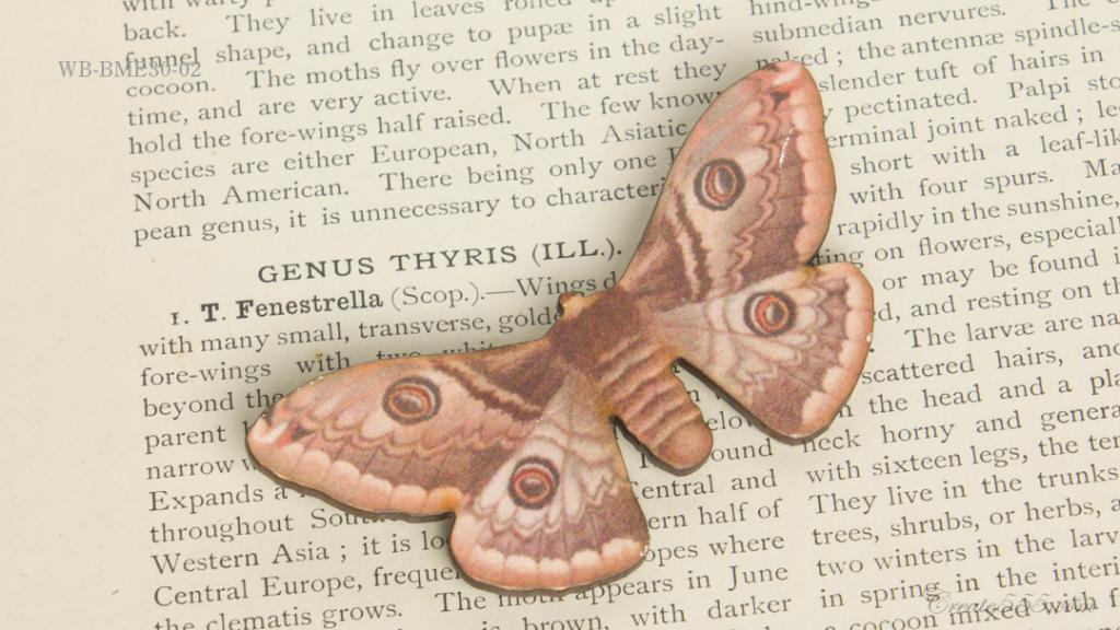 WB-BME30-02クジャクヤママユ Saturnia Spini—Austrian Emperor Moth