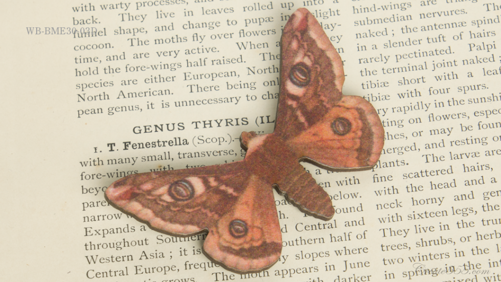 WB-BME30-03Dクジャクヤママユ類 Saturnia Pavonia-minor—Emperor Moth Male.