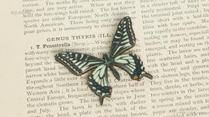 WB-PS-004 ナミアゲハ♂ 蝶のウッドブローチ