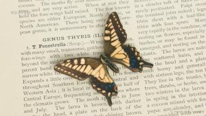 WB-PS-005キアゲハ♂ 蝶のウッドブローチ