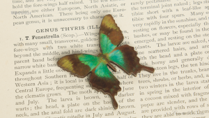 WB-PS-014 アオネアゲハ 蝶のウッドブローチ